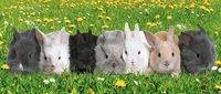Ravensburger puzzle La parade des lapins-Détail de l'article