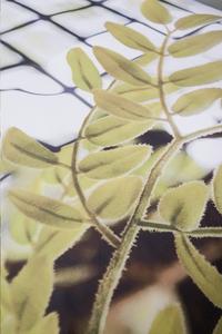 Suela Home Dekbedovertrek Chanine katoensatijn 240 x 220 cm-Artikeldetail
