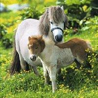 Ravensburger Puzzel 3-in-1 Lieve pony's-Artikeldetail