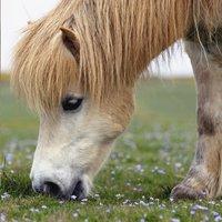 Ravensburger Puzzel 3-in-1 Lieve pony's-Vooraanzicht