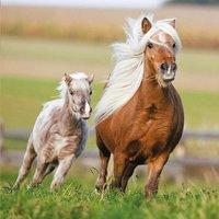 Ravensburger puzzle 3 en 1 L'amitié des poneys-Avant