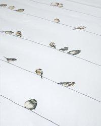 Marjolein Bastin Housse de couette Oiseau coton 140 x 220 cm-Détail de l'article