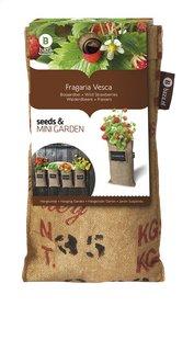 Baza Seeds & Mini Garden hangtuintje-Artikeldetail