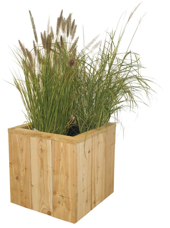 Image pour Jardinière Asper 60 x 60 x 60 cm à partir de ColliShop