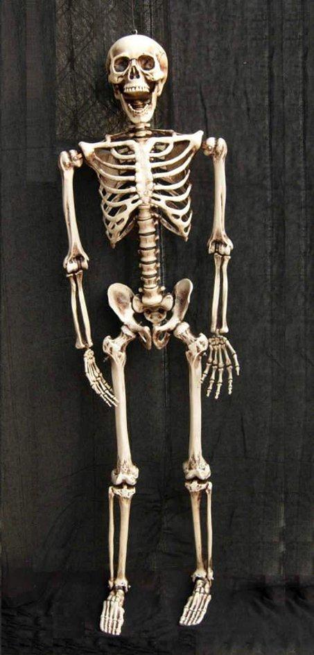 Afbeelding van Skelet from ColliShop