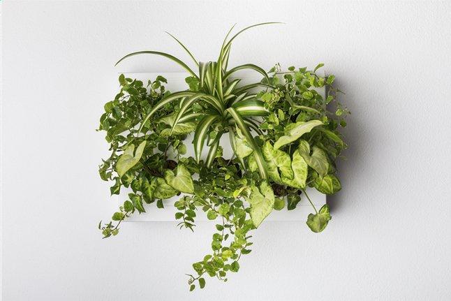Image pour Jardin vertical HOH! blanc à partir de ColliShop